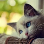 picture of cats , 7 Top Cutest Cat Picture Ever In Cat Category
