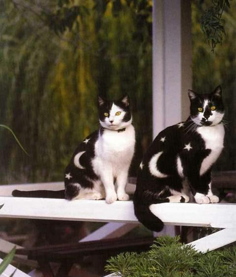 Cat , 6 Charming Pictures Of Tuxedo Cats : Pictures Of Cat