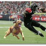 pitbull fight  , 6 Popular Michael Vick Dog Fighting Pictures In Dog Category