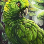 quaker parrot , 6 Wonderful Yellow Naped Amazon Parrot In Birds Category