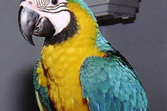 Scarlet Macaw , 7 Good Macaw Lifespan In Birds Category