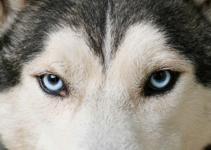 Dog , 7 Nice Pictures Of Sled Dogs : Sled Dogs