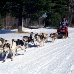 sled dogs , 4 Unique Dog Sled Pictures In Dog Category