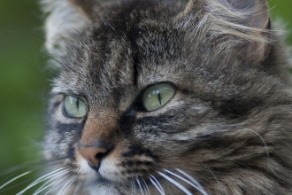 Tabby Cat , 6 Wonderful Tabby Cat Pictures In Cat Category
