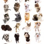 type of cats , 6 Best List Of Cat Breeds With Pictures In Cat Category