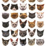 which kind of cat , 6 Best List Of Cat Breeds With Pictures In Cat Category