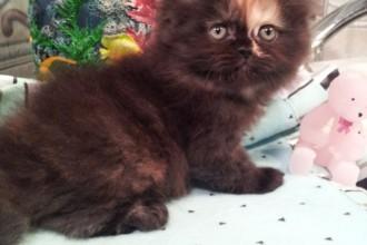 Female Persian , 6 Charming Persian Cat Names Female In Cat Category