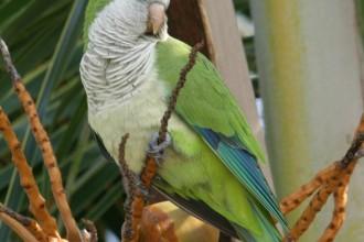 Bird Spix , 7 Beautiful Monk Parrots In Birds Category