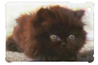 Black Persian Kitten in Dog