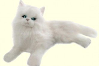 Bocchetta Snowflake , 8 Good Stuffed Persian Cat In Cat Category