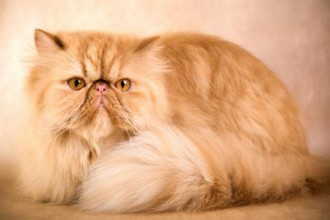 Cat Breeds in Invertebrates