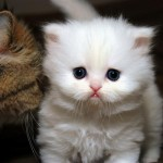Cat Grooming Supplies , 9 Good Grooming Persian Cats In Cat Category