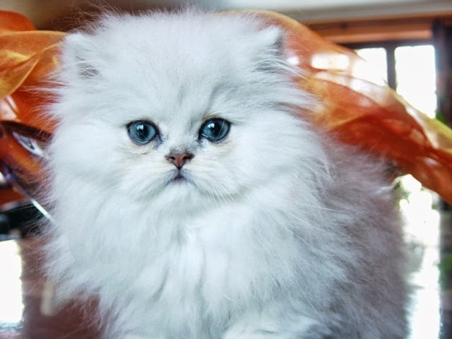 Cat names : Biological Science Picture Directory – Pulpbits net