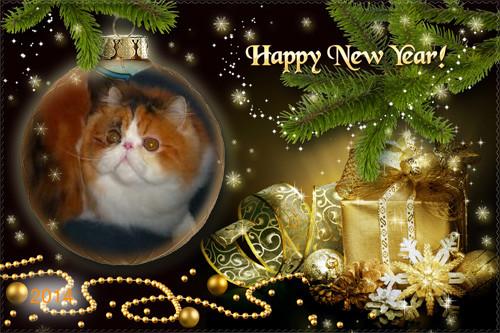 Cat , 6 Nice Persian Cat Rescue Virginia : Cute Cat Breed
