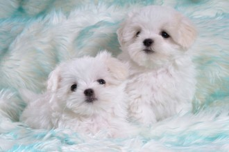 Cute White Puppies in Plants