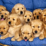 Cute puppies , 8 Cute Puppies For Sale In Williamsport Pa In Dog Category