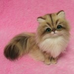 Felted Golden Persian Cat , 6 Cute Mini Persian Cats In Cat Category
