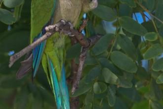 Monk Parrot , 7 Beautiful Monk Parrots In Birds Category