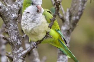 Parrot Pictures , 7 Beautiful Monk Parrots In Birds Category