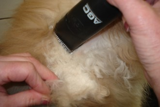 Cat , 5 Nice How To Groom A Persian Cat : Persian Cat's Coat