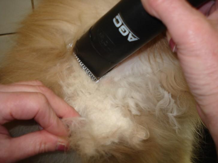 Cat , 5 Nice How To Groom A Persian Cat : Persian Cat's Coat