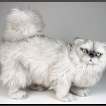Persian Cat Stuffed , 8 Good Stuffed Persian Cat In Cat Category
