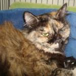 Persian cat rescue california , 10 Fabulous Persian Cat Rescue California In Cat Category