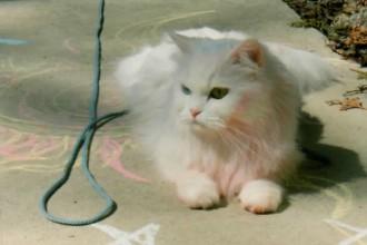 Persian Cat Rescue , 7 Cool Persian Cat Haircuts In Cat Category