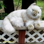 Plush Persian Cat , 7 Cute Persian Cat Lifespan In Cat Category