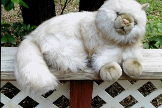 Plush Persian Cat in Beetles