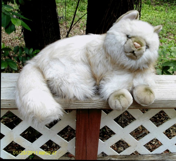 Cat , 7 Cute Persian Cat Lifespan : Plush Persian Cat