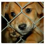 Pound Puppy , 6 Cute Pound Puppy Rescue Palo Alto In Dog Category