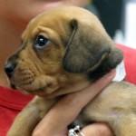 Pound Puppy Rescue , 6 Cute Pound Puppy Rescue Palo Alto In Dog Category