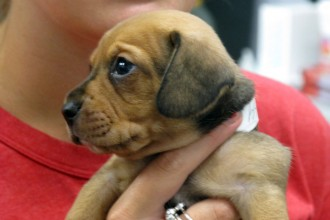 Pound Puppy Rescue in Genetics