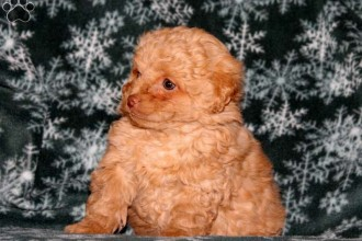 Puppies For Sale in pisces