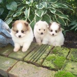 Puppy Parlor , 7 Cute Puppy Parlor Lisle Il In Dog Category