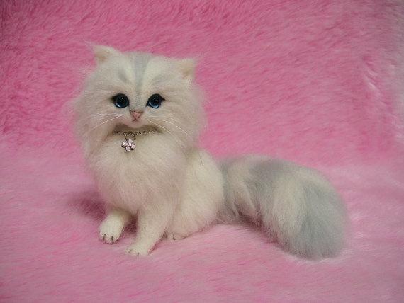 Cat , 6 Cute Mini Persian Cats : Silver Chinchilla Persian Kitten