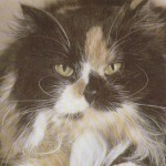 Tortoiseshell White Persian Cat , 7 Popular Tortoiseshell Persian Cat In Cat Category