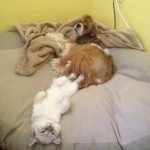 White kitten free to cuddle , 7 Cute Puppies And Kittens Danbury Ct In Dog Category