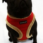 Yuppie Dog Harness , 7 Cute Yuppy Puppy Harness In Dog Category
