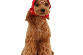 Yuppie Dog Hat By Puppia , 7 Cute Yuppy Puppy Harness In Dog Category