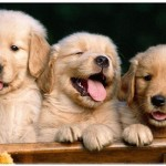 amazing dog facts , 7 Cute Do Puppies Have Umbilical Cords In Dog Category