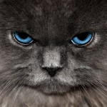 angry looking persian cat , 7 Cute Persian Cat Lifespan In Cat Category