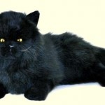 Bocchetta Onyx Stuffed Plush Black Persian Cat , 8 Good Stuffed Persian Cat In Cat Category