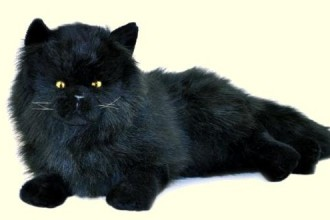 Bocchetta Onyx Stuffed Plush Black Persian Cat in Skeleton