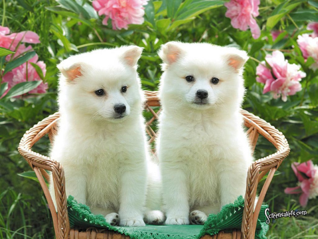 Cute puppies photos