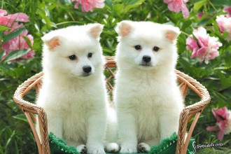 Cute puppies photos in Plants
