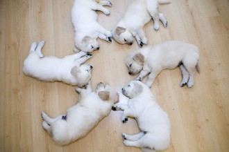 Cute Puppies Wallpaper , 8 Cute Puppies For Sale In Williamsport Pa In Dog Category