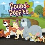 dog pound adoption , 6 Cute Pound Puppy Rescue Palo Alto In Dog Category