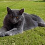 female persian cat , 6 Charming Persian Cat Names Female In Cat Category